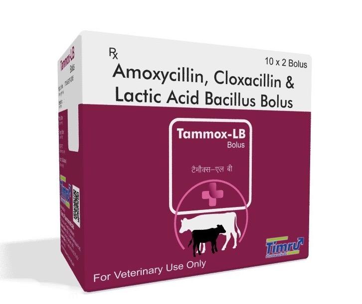 Veterinary Amoxycillin, Cloxacillin & Lactobacillus Bolus
